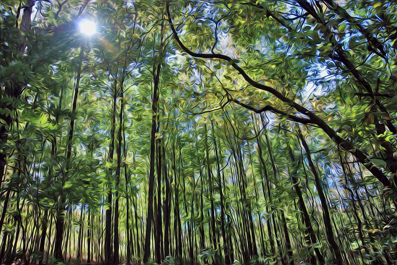 Trees 7285avan.jpg
