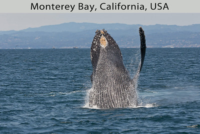 Monterey Bay, California, USA