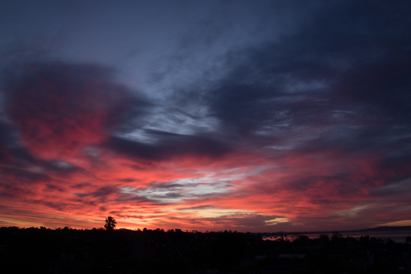 January 14 - Sunrise over a growing palm, Los Angeles.jpg