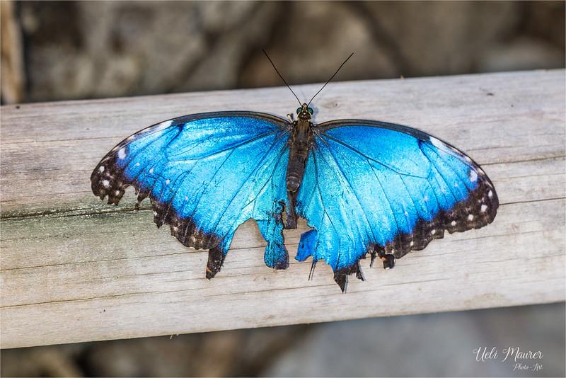 2018-02-07 Papiliorama Kerzers  - 0U5A6389.jpg