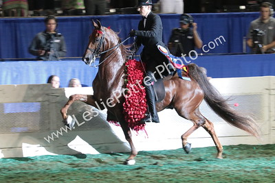 2019 World's Championship Saddlebred Horse Show
