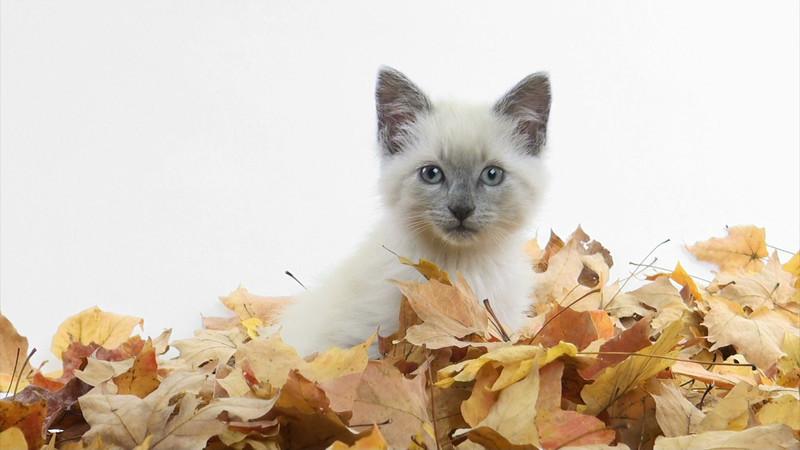 kitten_leaves_03.mov
