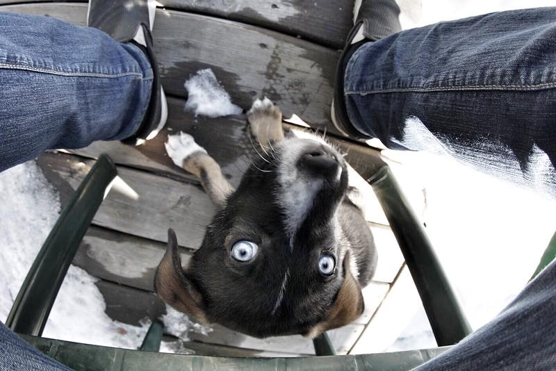 Cub puppy.jpg