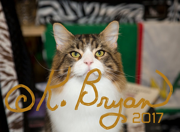 Conroe CFA Cat Show