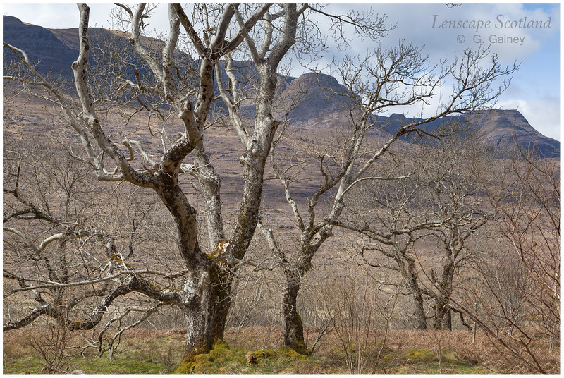 Rassal Ash Wood Nature Reserve and Beinn Bhan eastern corries (1)