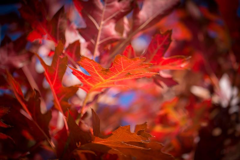 20151024-Fall Colors-88.jpg