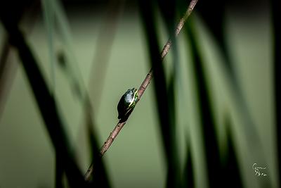 Wood Duck Preserve