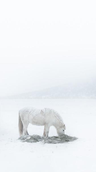 WHITE.mobile.jpg