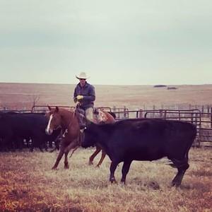 San Antonio Ranch Gelding Stakes