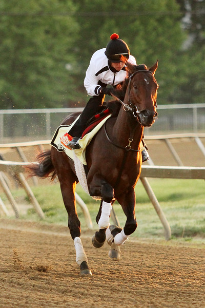 Orb (Malibu Moon) trains for the Preakness Stakes (Gr I) at Pimlico 5/17/13. Trainer: Claude McGaughey III. Owner: Stuart S. Janney & Phipps Stable