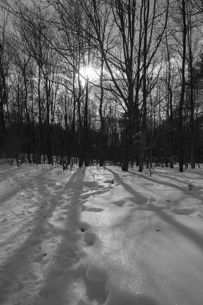 Lake of Ice - Lillian Anderson Arboretum - 3/6/15