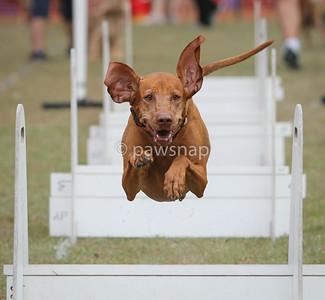 Durack Dog Spectacular Aug