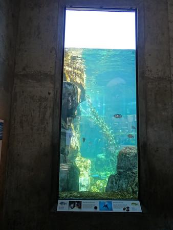 2013 05 Monterey Bay Aquarium