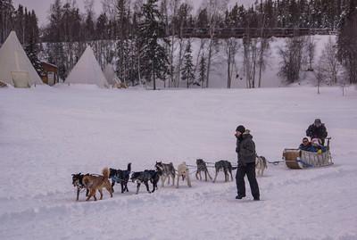 Dog sledding Yellowknife 2014