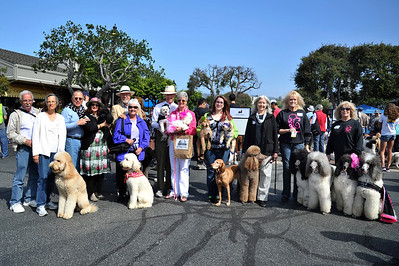 Poodle Day 2012