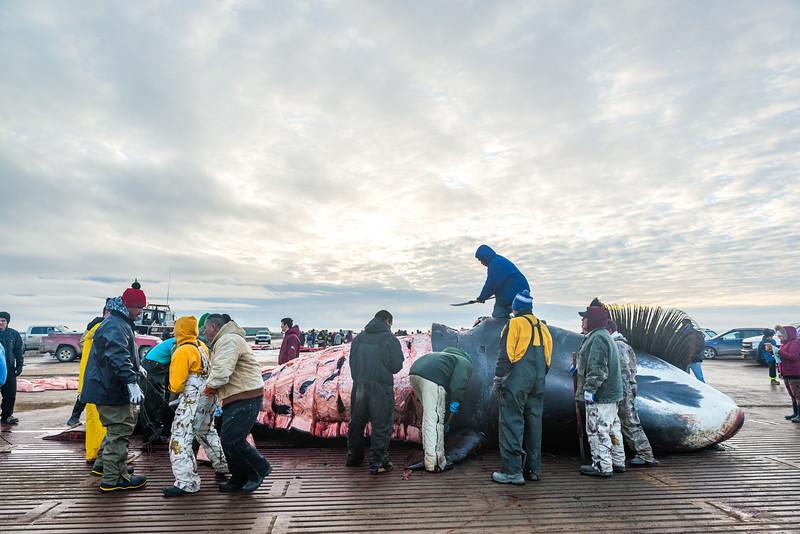 Utqiagvik Whaling-6104871-Juno Kim-nw.jpg