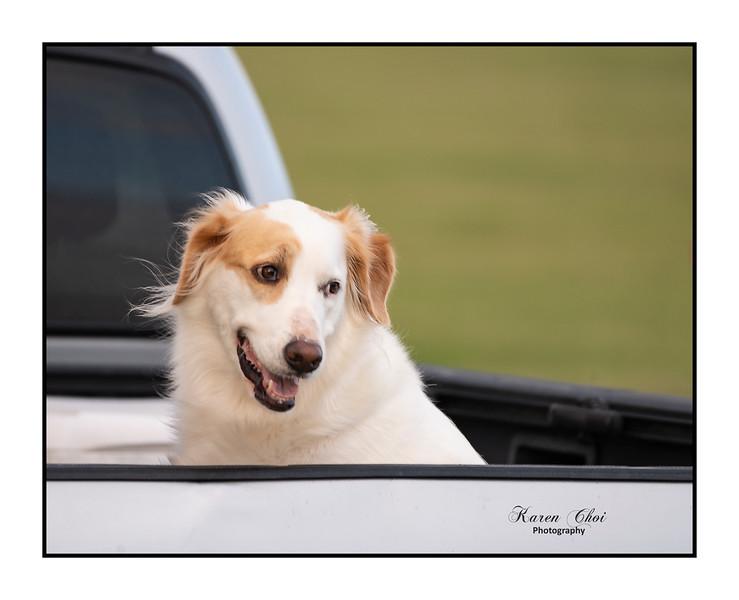 z dog in truck.jpg