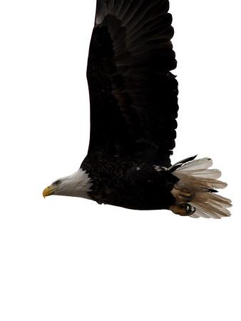 2018 Eagle Days