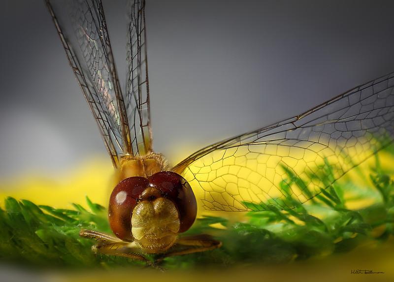 yellowfly-1.jpg