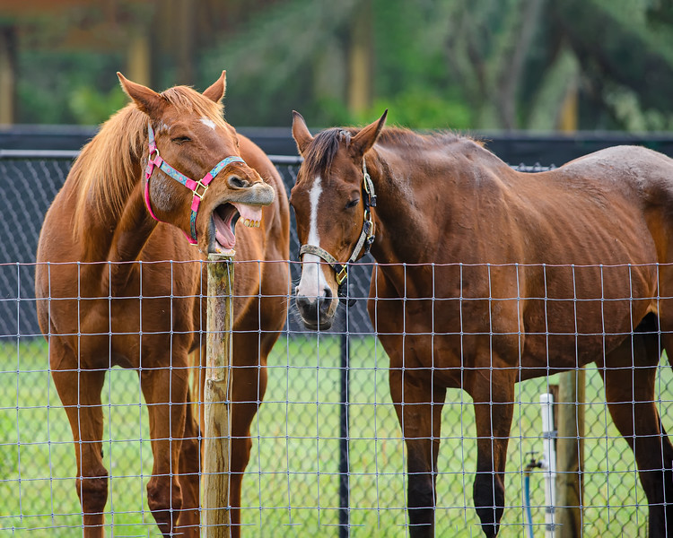 horses_DSC5945-web1360x1700U100.jpg