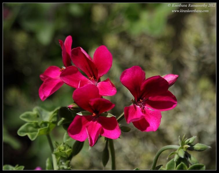 San Diego Botanic Garden, San Diego County, California, April 2012