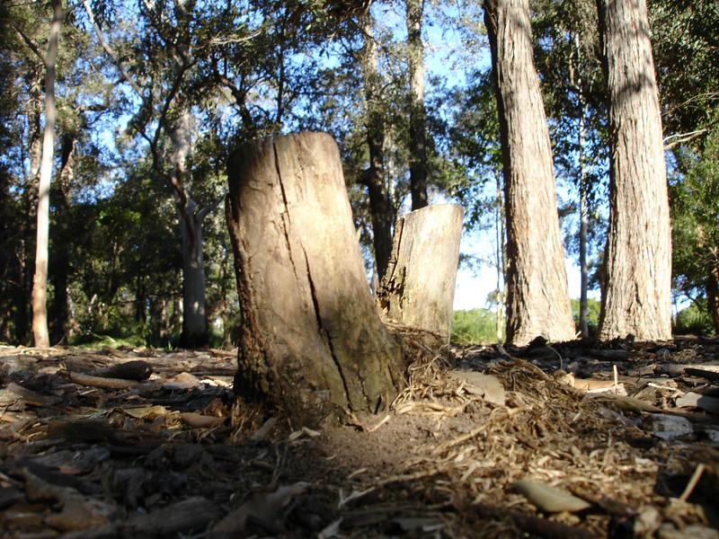 gorrez stump-4.jpg