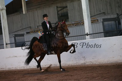 22. Five Gaited Amateur
