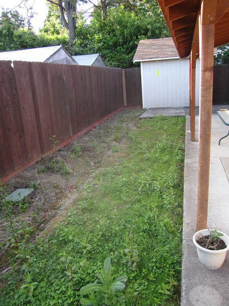 Backyard  before landscaping