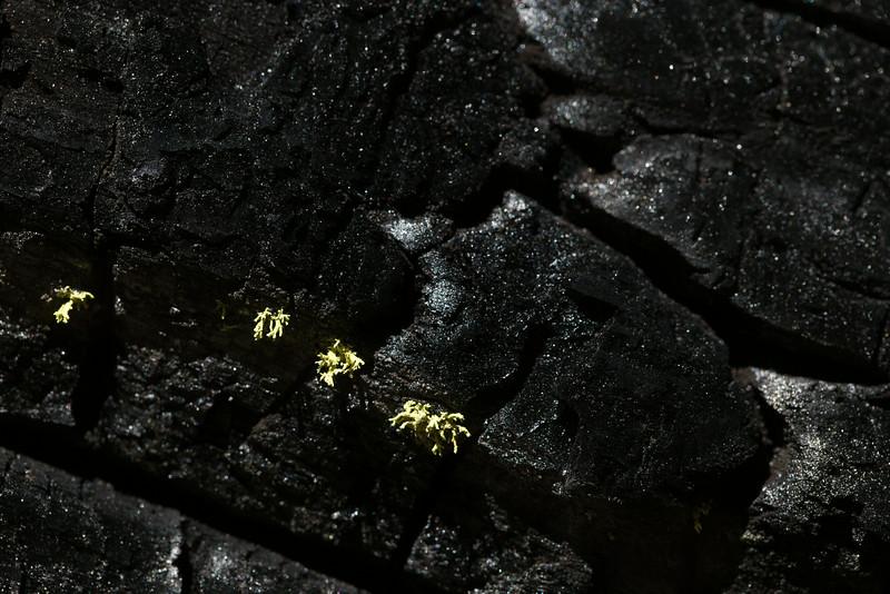 Sequoia_0344.jpg