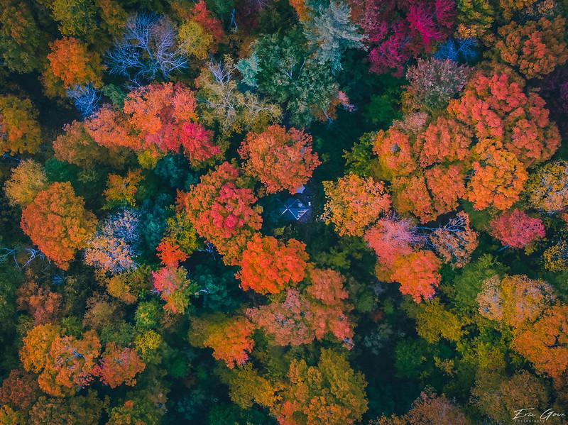 Fall Foliage 2018-10.jpg