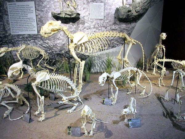 The Skeleton Museum