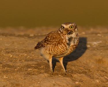 Owl Bloopers