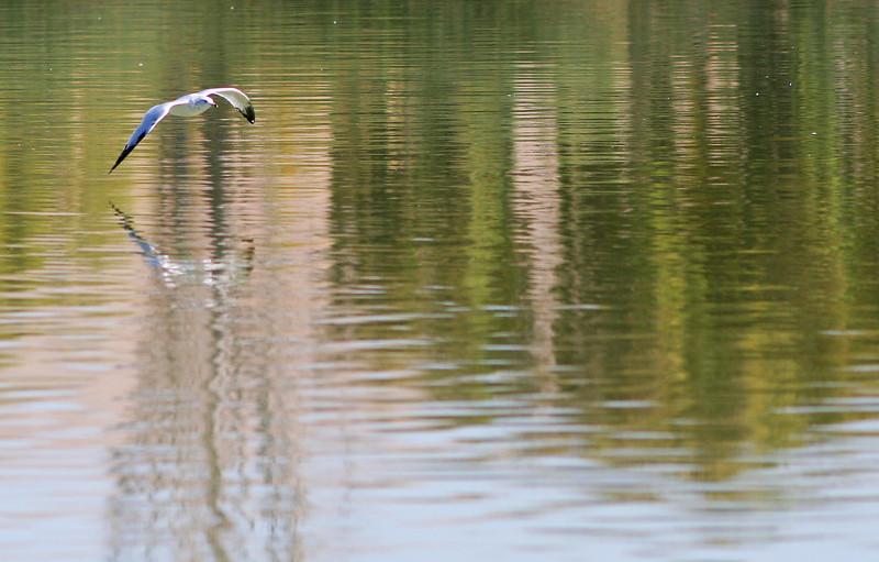1806 Bird & Reflections crop.jpg