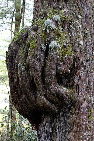 Tree Trunk at Te Anau.jpg
