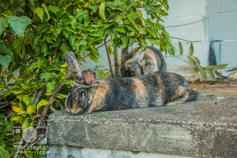 September 12, 2017 Bunnies in the Back Garden (9).jpg