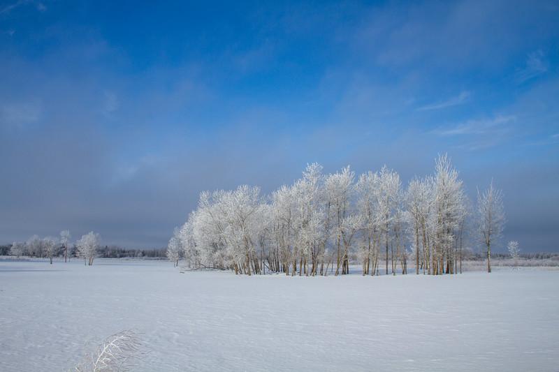 Hoar frost winter landscape CR229-29 Sax-Zim Bog MN  IMG_0043.jpg
