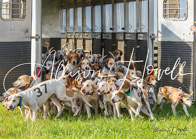 Hark Forward National Fox Hound Performance Championship