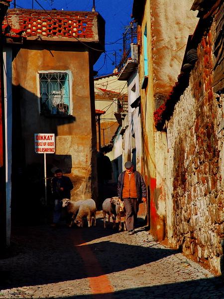 Bergama street sheep DSC04426.JPG