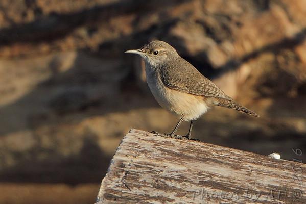 2016-01-29 Riverlands Migratory Bird Sanctuary