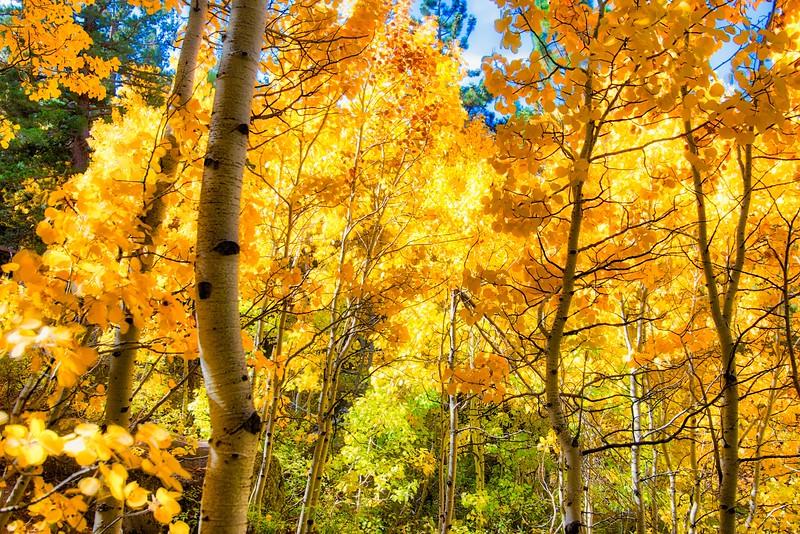 Tall Trees Backlit Luminar Kelby Filter BW_DSC8523.jpeg