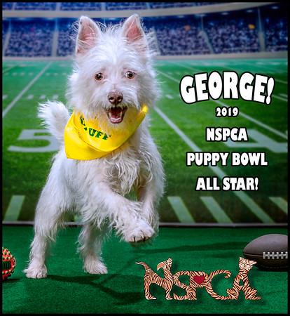 NSPCA Adopt A Bowl 2019