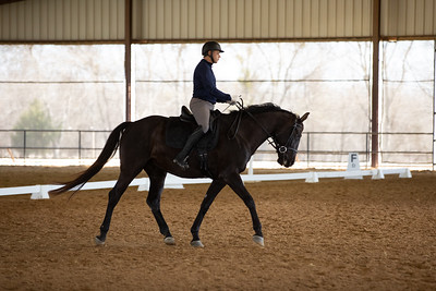 Horse 357