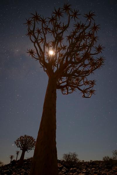 Namibia 69A3702.jpg