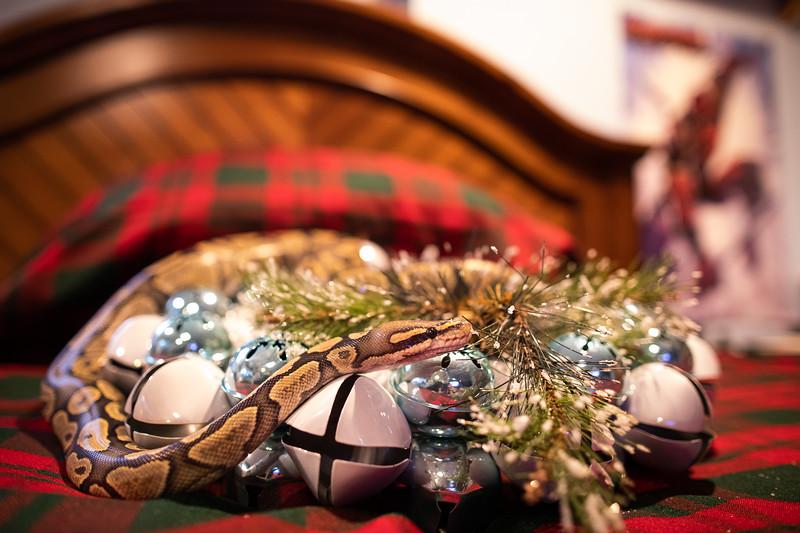 ChristmasSnakes19_0034.jpg