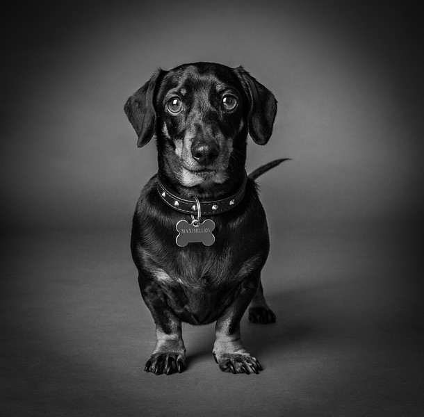 Pets_Chris Langham_9.jpg