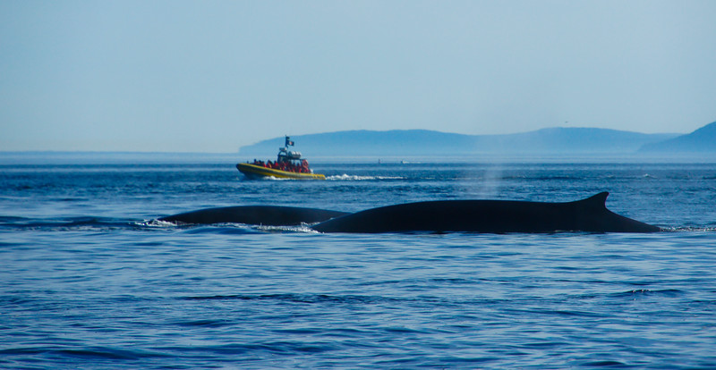 2011 quebec whale watching (7 of 80).jpg