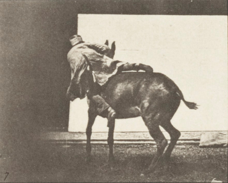 Horse Ruth, refractory with rider