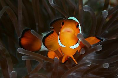 Thailand Underwater
