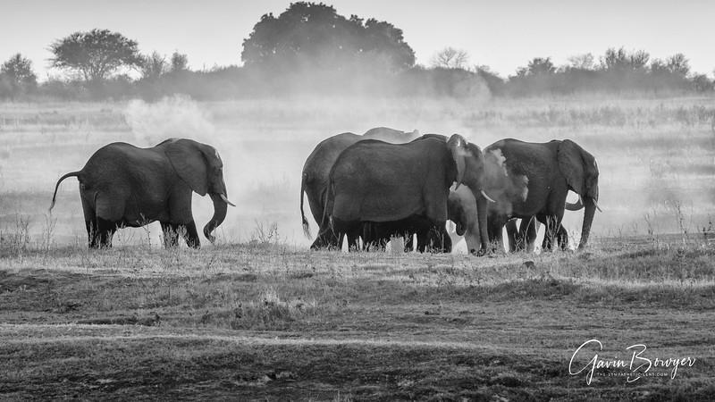 Elephants Botswana-11.jpg