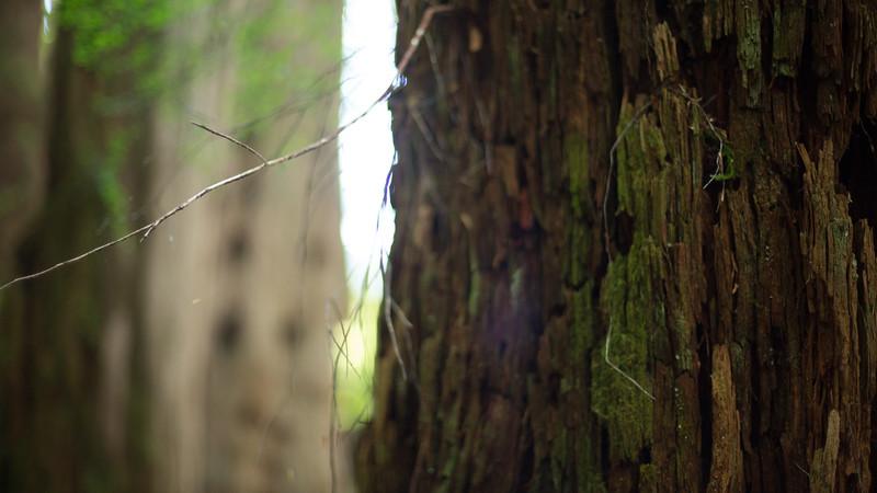 150913_Nikki_Forest_5313.jpg